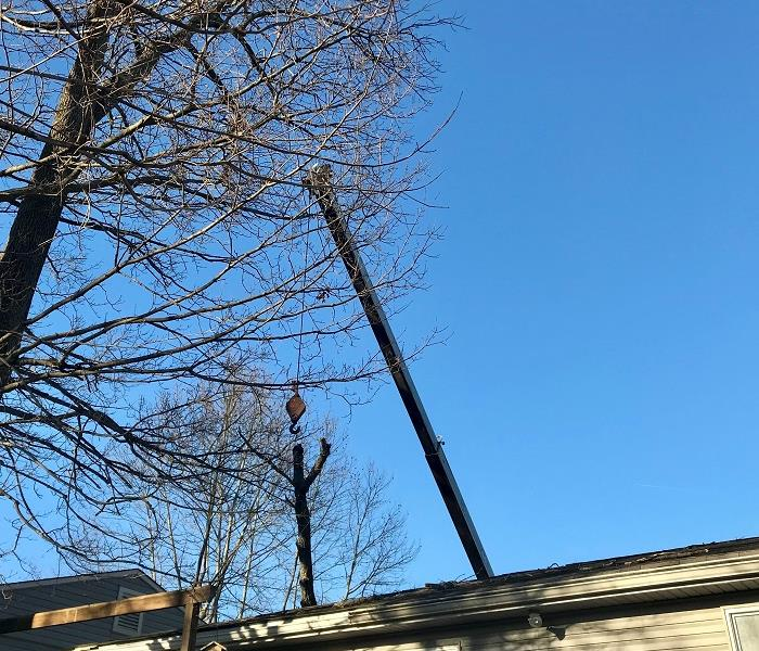A crane and hook above the roof of a house with a tree branch.