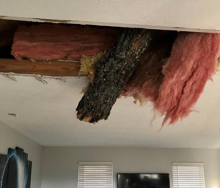 The ceiling of a home with a tree branch protruding through and insulation hanging down.
